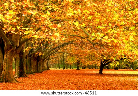 Fall in a Park - stock photo