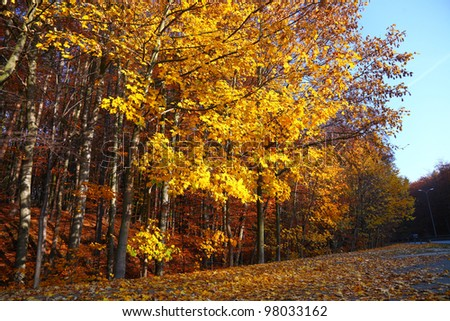Fall in Park beautiful autumn yellow wood tree road in Poland