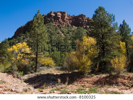 Fall in Zion National Park Utah with the leaves changing colors