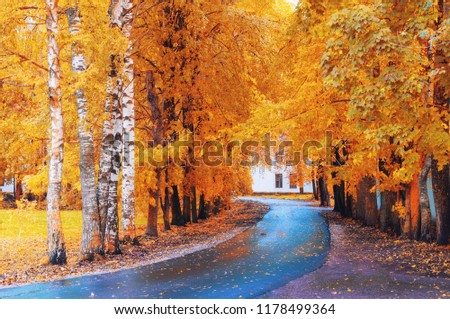 Fall landscape. Yellow fall trees and fall leaves on the wet footpath in park alley after rain
