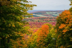 Fall landscapes. Colored trees during fall season