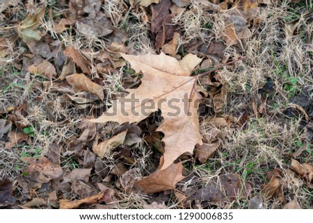 Fall leaf Background -  Autumn Leaves on the ground  #1290006835