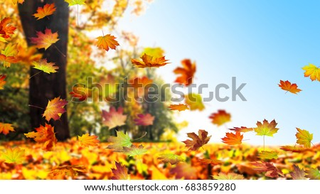 fall leaf in autumn #683859280