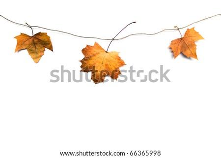 fall leafs #66365998