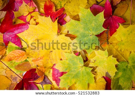 Fall leaves background. autumn leaves #521532883