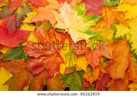 Fall leaves for an autumn background