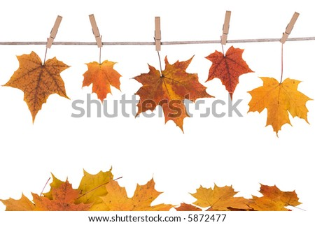 fall leaves hanging on a clothesline isolated on white #5872477