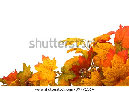 Fall leaves making a border isolated on a white background, fall border - stock photo