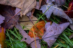 Fall leaves misc