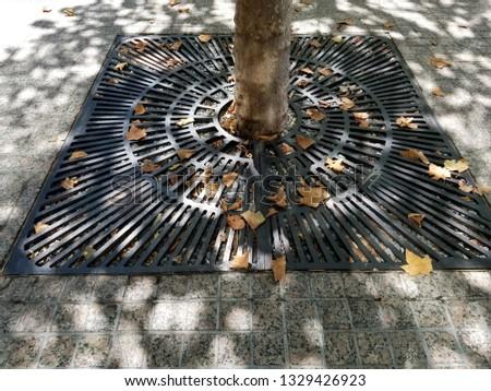 fall leaves Nyc #1329426923