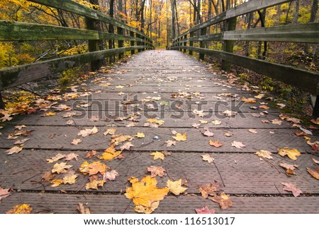 Fall Leaves on a wooden bridge in the forest Sharon Woods Gorge State Nature Preserve, Cincinnati, Ohio