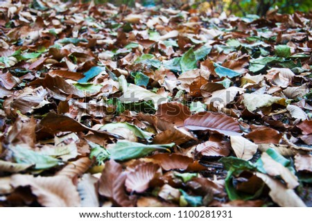 Fall leaves on the ground #1100281931