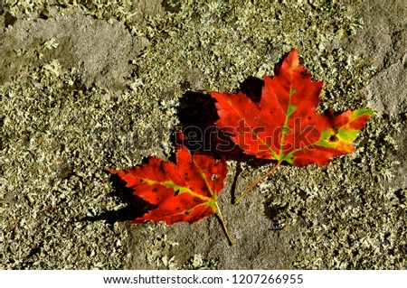 Fall leaves on the ground #1207266955
