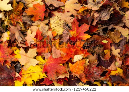 Fall Leaves on the ground #1219450222
