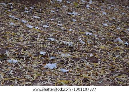 Fall leaves on the ground #1301187397