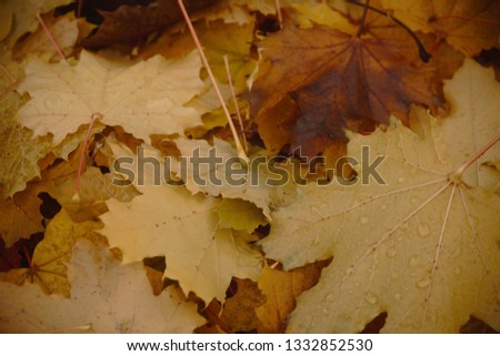 Fall leaves on the ground #1332852530