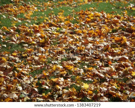 Fall leaves on the ground #1383407219
