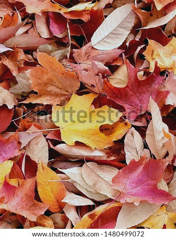 Fall Leaves On The Ground #1480499072