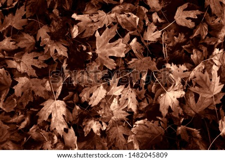 Fall leaves on the ground #1482045809