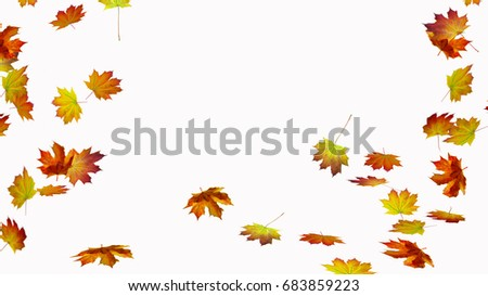 fall leaves on white background #683859223