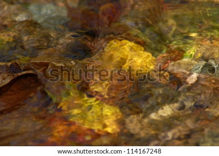 Fall Leaves Under Clear Stream Water, Shenandoah National Park, Virginia, USA