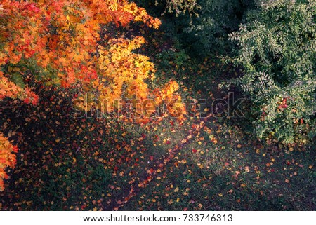 Fall Maple tree branch in the sunset rays. Aerial photo