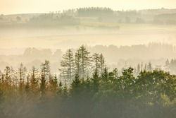 fall misty and foggy country landscape with a tree silhouette on a fog at sunrise, rural countryside Jihlava, Puklice Vysocina Czech Republic