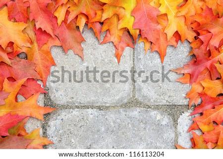 Fall Oak Tree Leaves Frame Over Stone Bricks Paver Patio