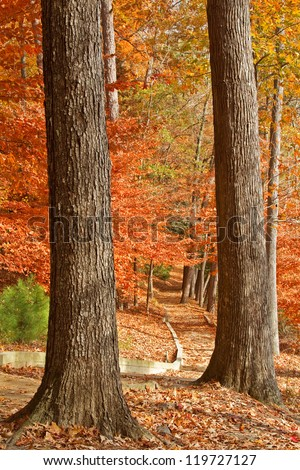 Fall path framed by two tree trunks