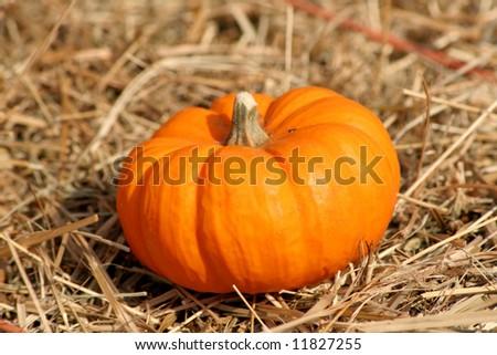 Fall Pumpkin on straw #11827255
