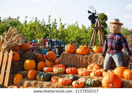 Fall Pumpkin Patch #1137850517