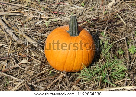 Fall pumpkin patch and farm tour #1199854330