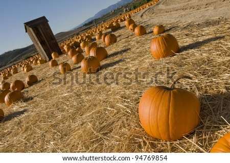 Fall pumpkin patch and shack