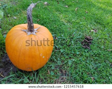 fall pumpkin picture
