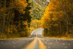 Fall road during autumn at June Lake, California with yellow aspen trees, view of road, falling leaves