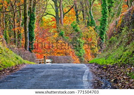 fall scenic route Ayrshire Scotland #771504703