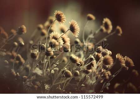 fall season flowers closeup - stock photo