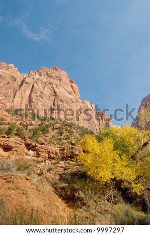 Fall season foliage in Zion National Park