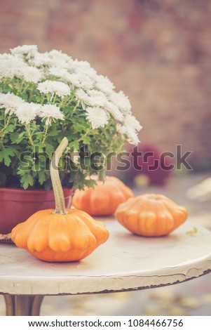Fall season or Halloween table decoration on the table in the backyard or terrace. Small pumpkins and Chrysanthemums in the pot in autumn garden #1084466756
