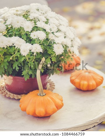 Fall season or Halloween table decoration on the table in the backyard or terrace. Small pumpkins and Chrysanthemums in the pot in autumn garden #1084466759
