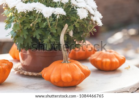 Fall season or Halloween table decoration on the table in the backyard or terrace. Small pumpkins and Chrysanthemums in the pot in autumn garden #1084466765