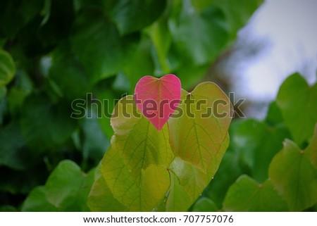 Fall sending love #707757076