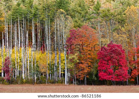 Fall splendor of red, yellow and orange