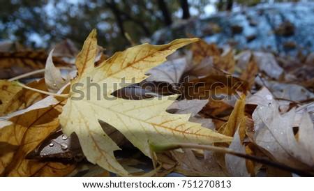 Fall Spotlight #751270813