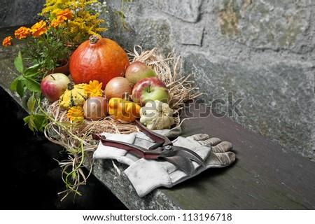 fall still life with halloween pumpkins in the garden