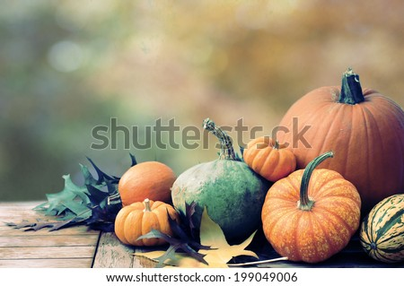 Fall Still Life with pumpkins and gourds against colorful background with room or space for copy, text.  Horizontal with vintage cross process.