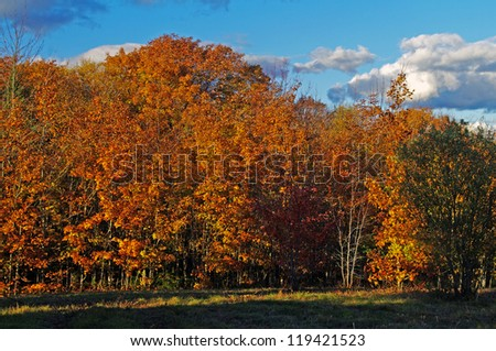 Fall Trees along a tree line