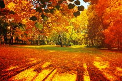 Fall trees in sunny autumn park lit by sunshine - sunny fall landscape in bright sunlight