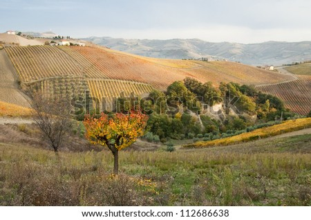 Fall valley with a lonesome yellow tree - stock photo