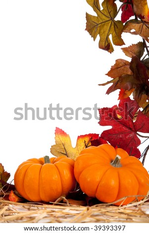 Fall vegetables as a background including pumpkins, gourds, apples, grapes, mini-corn and pears